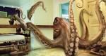 Octopus8Studios